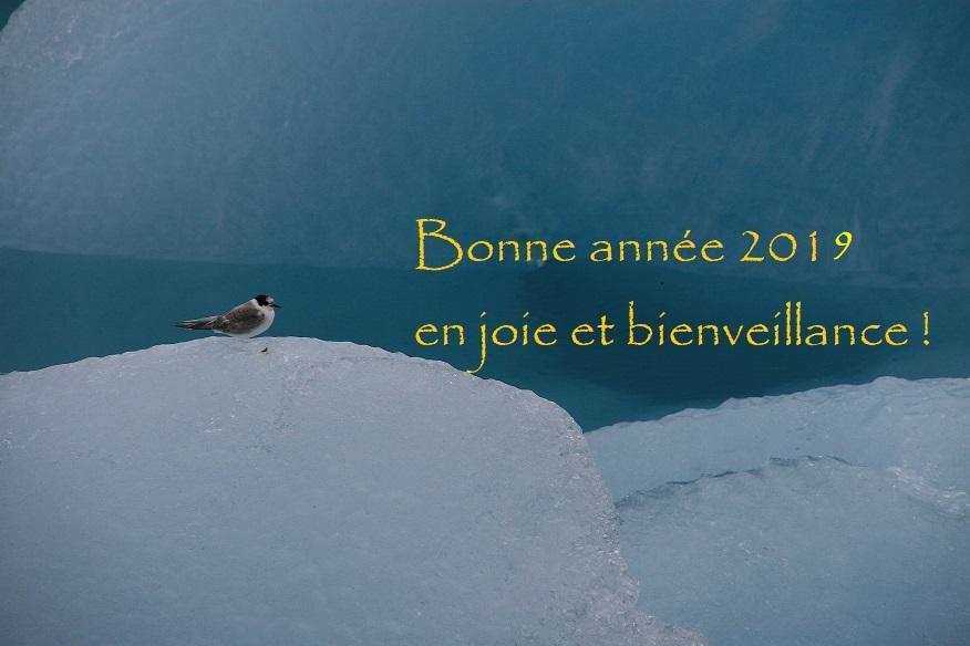 """Au bord du lac gelé, le petit oiseau chante """"bonne année 2019 en joie et bienveillance"""""""